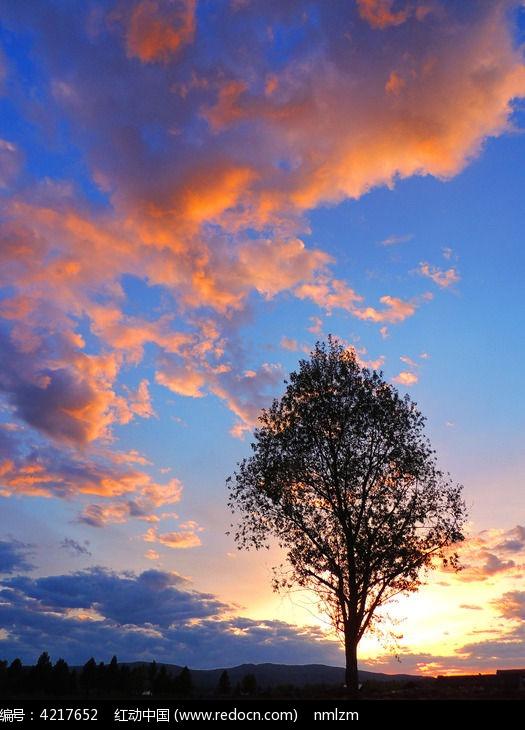 夕阳下的树木图片,高清大图_天空云彩素材