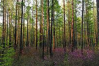 原始森林春花烂漫