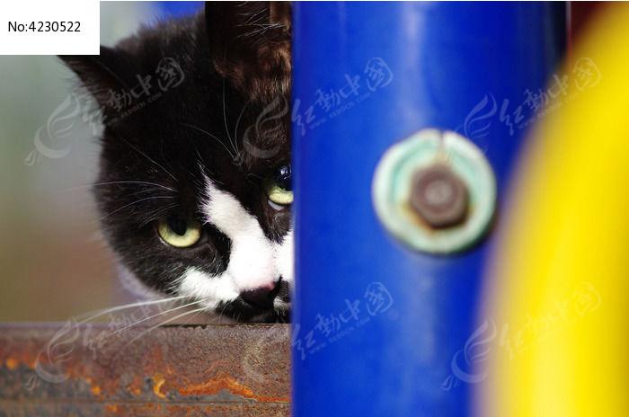 害羞的小猫图片,高清大图_陆地动物素材
