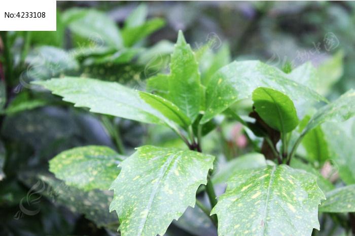 植物叶子图片,高清大图