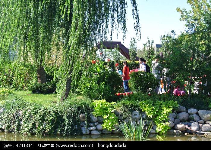 河边的柳树图片,高清大图_森林树林素材_编号4241314