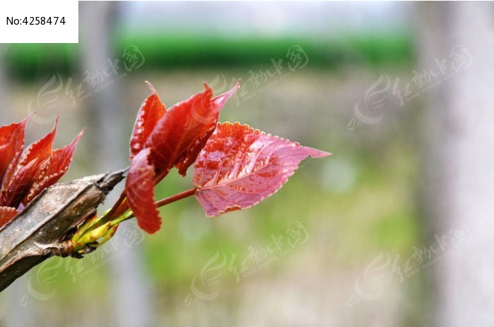 原创摄影图 动物植物 树木枝叶 树叶