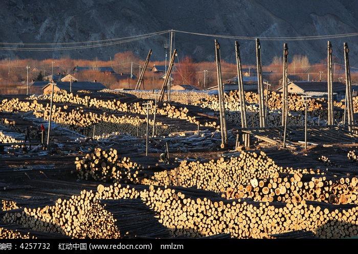 贮木场木材图片