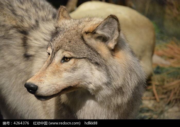 野狼功放电源电路图