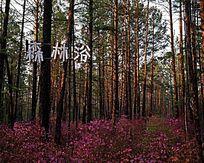 春季林海森林浴