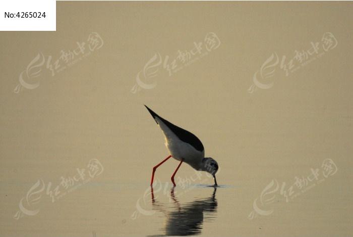 原创摄影图 动物植物 空中动物 湖泊里的水鸟  请您分享: 红动网提供
