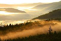 森林彩雾升腾
