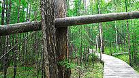森林蜿蜒的木栈道