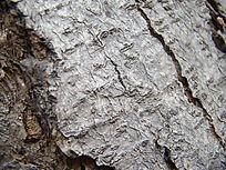 树皮自然斜线纹理