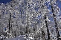 原始森林之冬