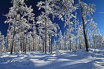 原始森林之雪