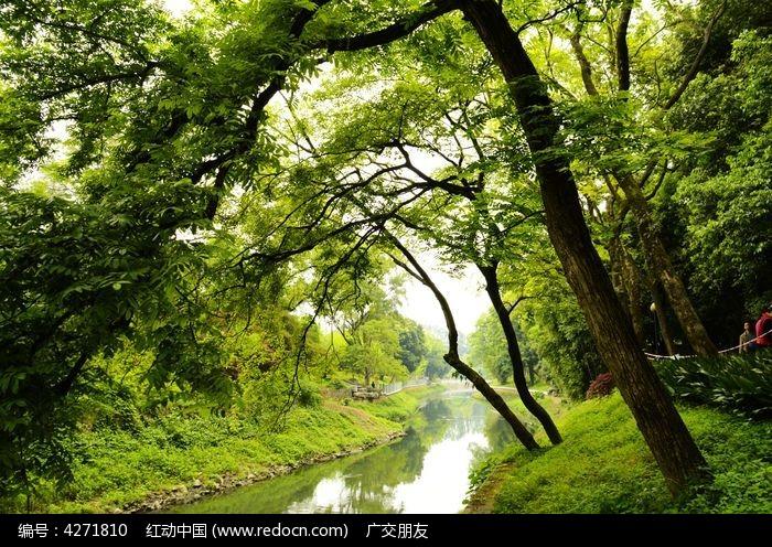 高清春天里的森林小溪