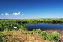 扎龙湿地地理风光