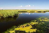 扎龙湿地景象