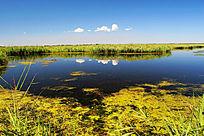 扎龙自然保护区湿地