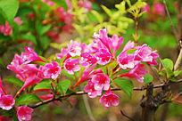 争艳的小红花