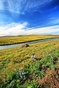 额尔古纳河草甸野花开