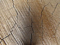 百年老树的年轮,自然的木纹弧度