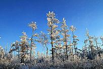 冬季原始森林雪景