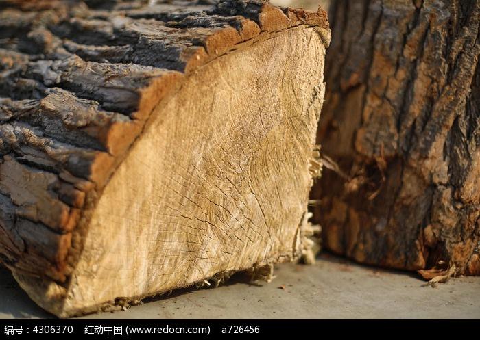 原创摄影图 动物植物 树木枝叶 木头切面特写  请您分享: 红动网提供
