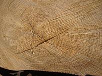 年轮自然的百年老树墩