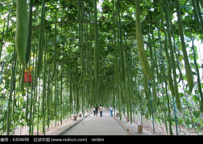 欧式室外植物长廊