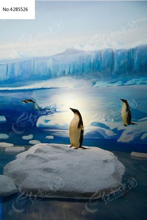 原创摄影图 动物植物 水中动物 天津自然博物馆内景-企鹅标本照片  请