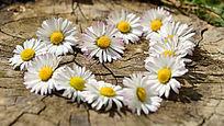 心型鲜花菊花高清高分辨率摄影图