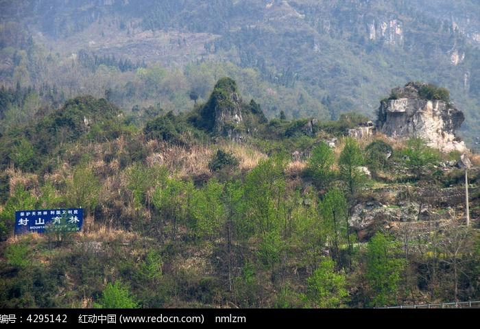原創攝影圖 自然風景 森林樹林 宜昌市封山育林區  請您分享: 素材
