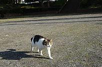 形影相吊的猫