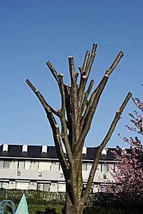 修剪的树枝