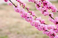 红艳艳的鲜花开满枝头