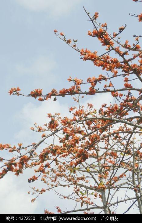 木棉树高清图图片,高清大图_树木枝叶素材