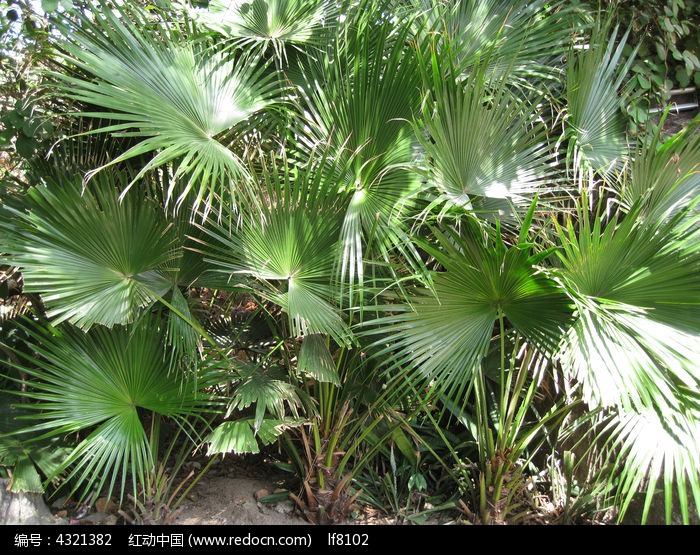 南方的植物图片,高清大图_树木枝叶素材