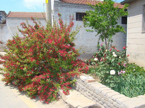 屋前美丽的花园