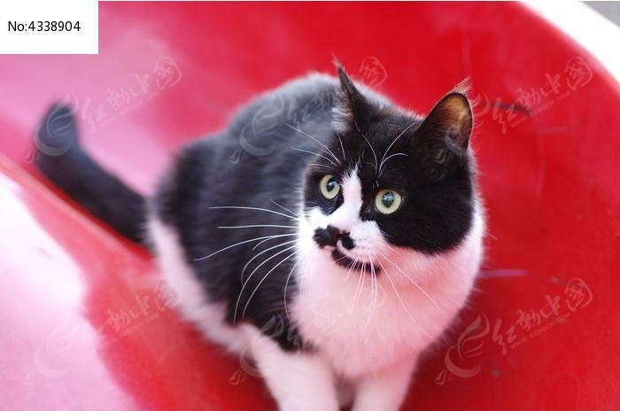 流浪小猫图片,高清大图_陆地动物素材