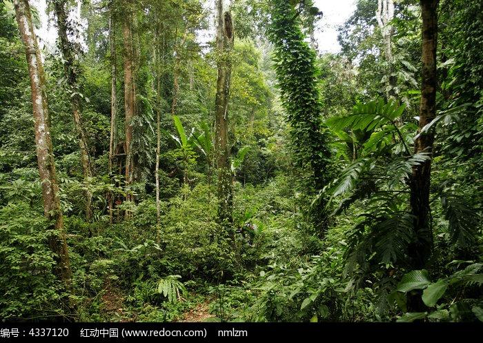 原创摄影图 动物植物 树木枝叶 雨林谷的热带雨林
