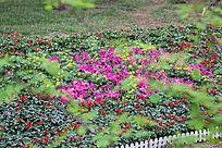 草地上摆放的鲜花