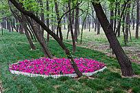 草地上围成一圈的鲜花