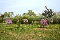 果树林图片