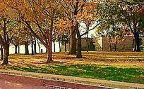 路边树木风景