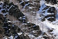 山崖上的白桦树