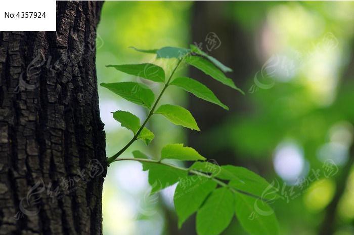 树干树叶图片,高清大图