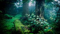 天目山原始森林