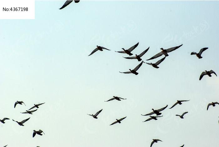 天空飞鸟手绘图片大全