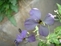墙角下的花
