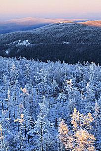 原始森林雪景