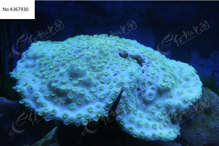 海洋植物园的珊瑚图片,高清大图_动物植物素材