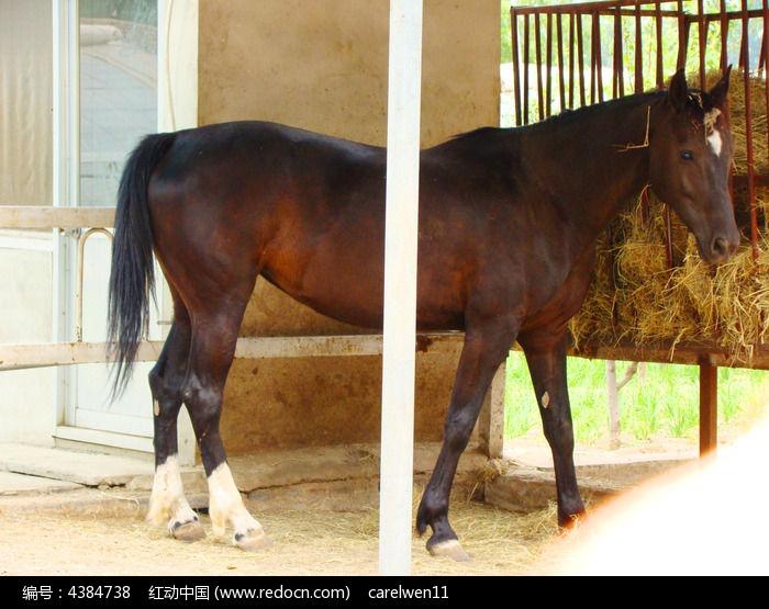 马棚里的骏马图片,高清大图_陆地动物素材