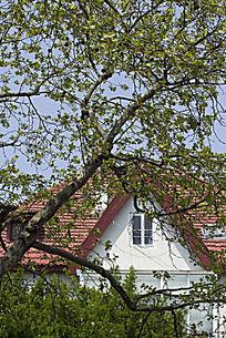 白墙红瓦和树